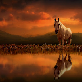 Across the Water by Jennifer Woodward - Digital Art Animals ( water, animals, nature, horses, sunset, horse, wildlife, reflections, sunrise, landscape )