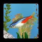 aniPet Freshwater Live WP icon