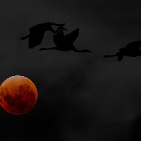 Eclip by Kiên Lâm - Digital Art Things ( moon, trang mau, 350mm, telyt, kienmm, seu, vietnam, leica, huyet nguyet, eclip, olympus )