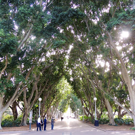 Hyde Park, Sydney, Australia by Di Mc - Novices Only Street & Candid ( canopy, park, path, trees, walkway, walk, city )