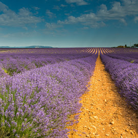 Valensole_Provence by Miroslav Havelka - Landscapes Prairies, Meadows & Fields