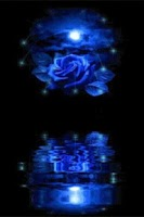 Screenshot of Blue Rose Reflected In Water L