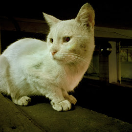 Naughty Cat Bad Girl by Ahmed Taha - Animals - Cats Kittens ( cat, girl, naughty, pets, garage, bad,  )