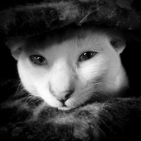 Snowball by Babor Ali Khan - Black & White Animals (  )