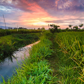 In the middle of ricefields by Budi Astawa - Landscapes Prairies, Meadows & Fields ( tegalbadeng, bali, negara )
