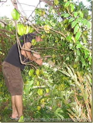 brians starfruit tree
