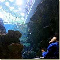 Daniel in the underwater viewing room at the California Academy of Sciences Philippine Reef Tank