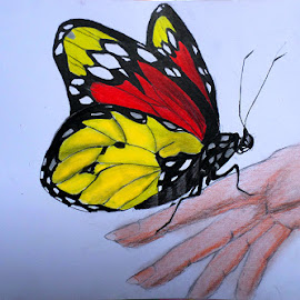 Butterfly on my hand by Yongki Wahyu - Drawing All Drawing