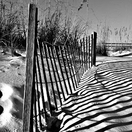 Sand Fence by Nathan Porath - Abstract Patterns ( beaches, sand, shadow, florida, beach, shadows,  )