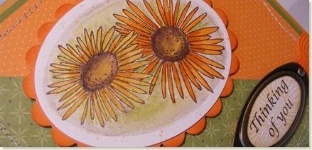 Daisy Border 9-12-08