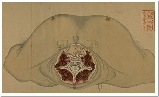 anatomical_scroll_5