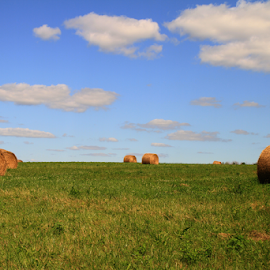 Hay Bales by Marsha Biller - Landscapes Prairies, Meadows & Fields ( field, rolled, hay, cloudy, bales, round, bluesky )