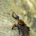 Bee Assassin