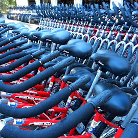 Bikes for Rent 3 by Kathy Rose Willis - Transportation Bicycles ( bicycles, red, bikes, handlebars, rent, seats, multiple, blue-gray,  )