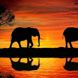 Balik Kekandang by Juprinaldi Photoart  - Digital Art Animals