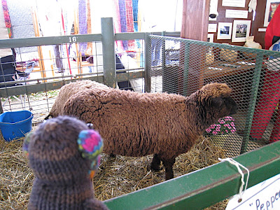 Seymour sheep
