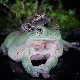 by Adi Parmana - Animals Amphibians