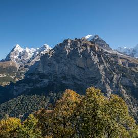 Swiss Alps by Mike Shaw - Landscapes Mountains & Hills ( hills, mountains, fall, trees, switzerland, bluesky )