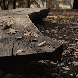 Made by wood by Adam Bartoš - City,  Street & Park  City Parks ( park, bench, autnum, leaves, public, furniture, object )