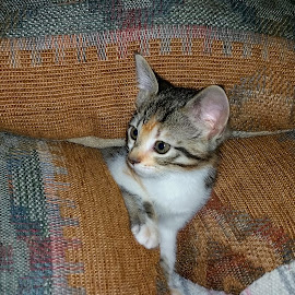 My Pets by Cathy Orlowski - Animals - Cats Kittens (  )