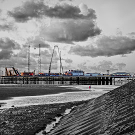 Beachcomber by Niki Cooke - City,  Street & Park  Amusement Parks ( water, seagull, color, black and white, pier, beach )