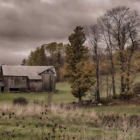 South Peacham Vermont Barn by Martin Belan - Landscapes Prairies, Meadows & Fields ( farm, barn, autumn, fall, vermont,  )