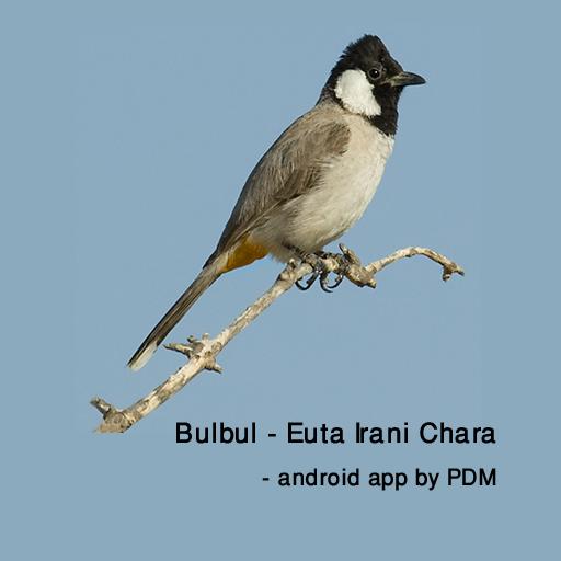 Bulbul - Euta Irani Chara LOGO-APP點子