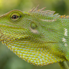 by Erfan Idola - Animals Reptiles
