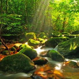 My Secret Garden by Steven De Siow - Landscapes Forests ( secret garden, tropical, landscape photography, forest, landscape )