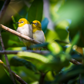 It must be love by Mahdi Hussainmiya - Animals Birds ( love, nature, pair, wildlife, couple, birds, romance )