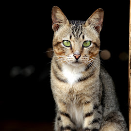 I Love  by Pandu Dewanata - Animals - Cats Portraits