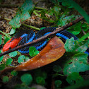Blue Malaysian Coral Snake