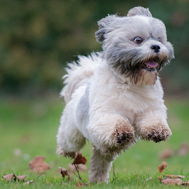 lets go by Michael Sweeney - Animals - Dogs Running ( expression, natural light, joy, michael sweeney, nikon dog, run, running, emotion, life, d3, joyfull, pet, pro, dog, nikon, animal )