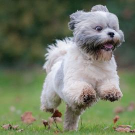lets go by Michael Sweeney - Animals - Dogs Running ( expression, natural light, joy, michael sweeney, nikon dog, run, running, emotion, life, d3, joyfull, pet, pro, dog, nikon, animal )