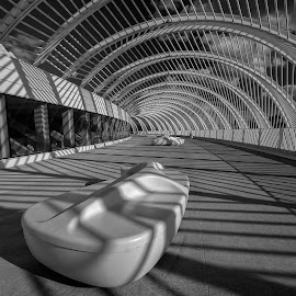 Benches on Terrace by Bill Camarota - Buildings & Architecture Public & Historical ( modern, university, monochrome, florida, polytechnic, campus )