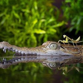 Best Friend by Adi Parmana - Animals Reptiles (  )