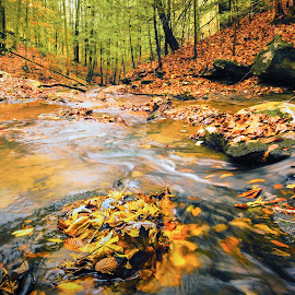 Frozen Head State Park, TN by Trent Eades - Landscapes Waterscapes ( stream, creek, trees, forest, leaves, woods, river )