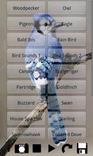 玩娛樂App|鳥的聲音免費|APP試玩