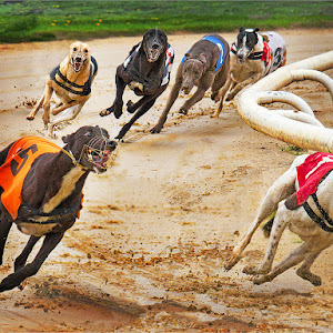 6 dogs final digital size.jpg