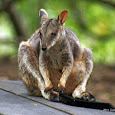 Marsupials of the World