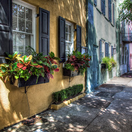 Rainbow Row by John Hoey - Buildings & Architecture Homes ( #south carolina #5d mark iii #charleston #rainbow row #sc #buildings \ and\ architecture #colorful #digital #dslr #famous #historic #homes #houses #multicolored #wide angle )