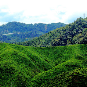 From Mountain to cup... (Tea Garden...) by Esyam Din - Landscapes Mountains & Hills