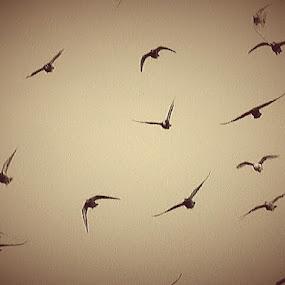 A Flock by Nat Bolfan-Stosic - Uncategorized All Uncategorized ( free, day, flock, birds, rain )