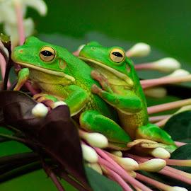 by May Wah - Animals Amphibians