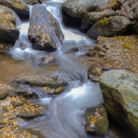 Flowing Water by William Tranmer - Nature Up Close Water ( water, stream, autumn, flowing water, rocks, slow shutter )