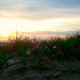 Lonely Pink by Valerie Bombino - Landscapes Beaches ( beach flowers, beach march, marshes, beach sunrise, beach shrubs, shrubs at beach,  )