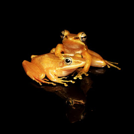 Don't worry Brother...I'm still here for You... by Chandra Kushartanto - Animals Amphibians