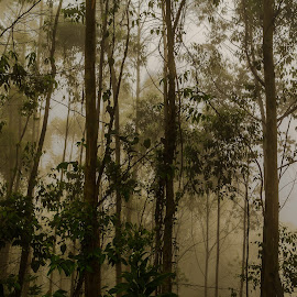 Forest Scene by Georgia Darlow - Landscapes Forests ( dawn, tree, kerala, forest, india, landscape, morning, mist )