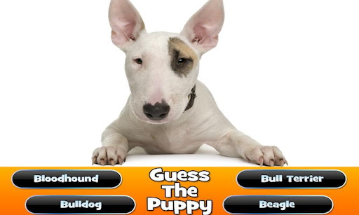 Guess The Puppy Trivia