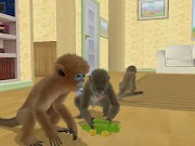 Petz Crazy Monkeyz